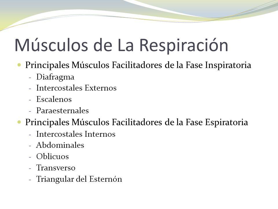 Músculos de La Respiración Principales Músculos Facilitadores de la Fase Inspiratoria - Diafragma - Intercostales Externos - Escalenos - Paraesternale
