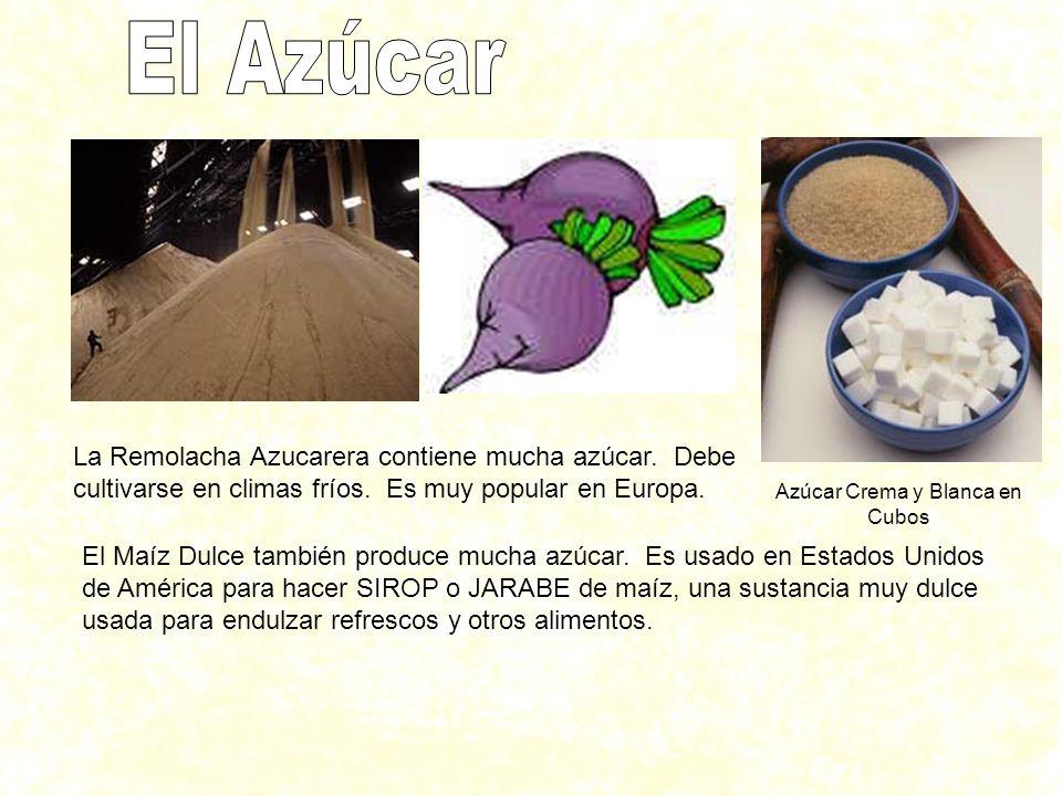 La Remolacha Azucarera contiene mucha azúcar. Debe cultivarse en climas fríos. Es muy popular en Europa. El Maíz Dulce también produce mucha azúcar. E