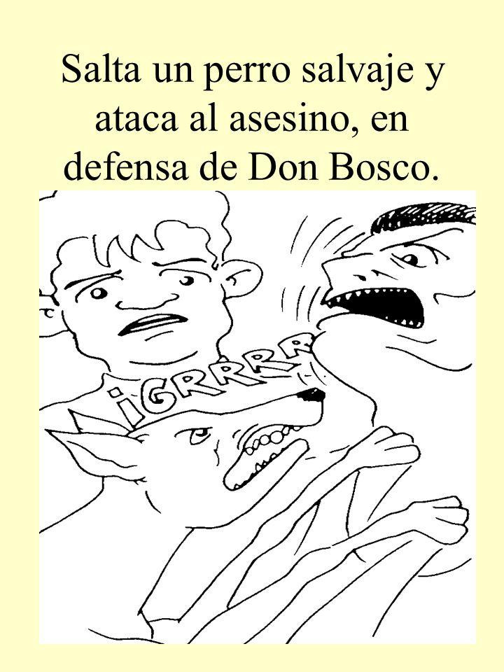 Salta un perro salvaje y ataca al asesino, en defensa de Don Bosco.