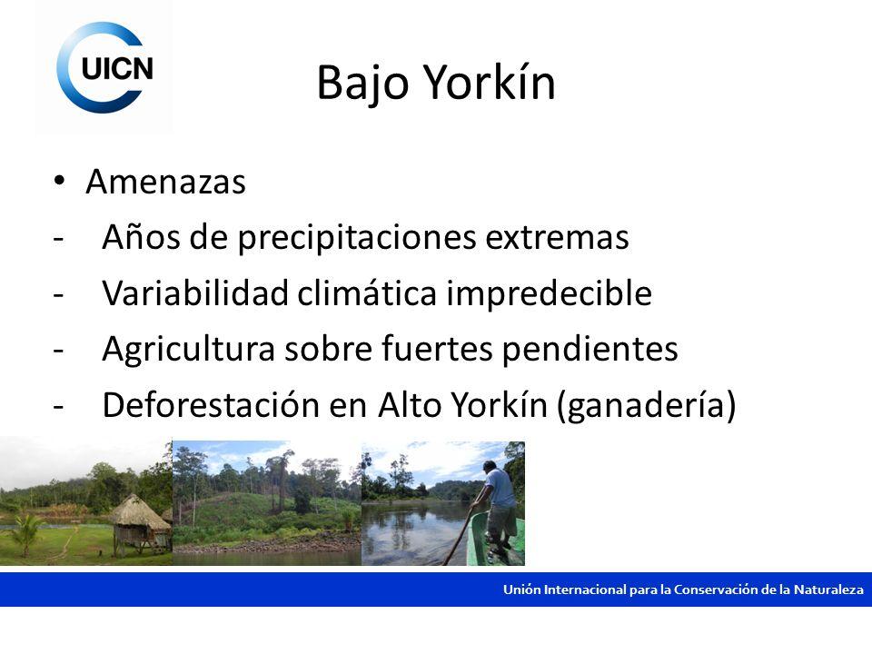 Unión Internacional para la Conservación de la Naturaleza Bajo Yorkín Amenazas -Años de precipitaciones extremas -Variabilidad climática impredecible