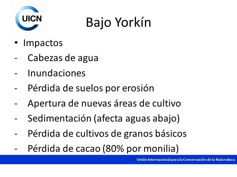 Unión Internacional para la Conservación de la Naturaleza Bajo Yorkín Impactos -Cabezas de agua -Inundaciones -Pérdida de suelos por erosión -Apertura