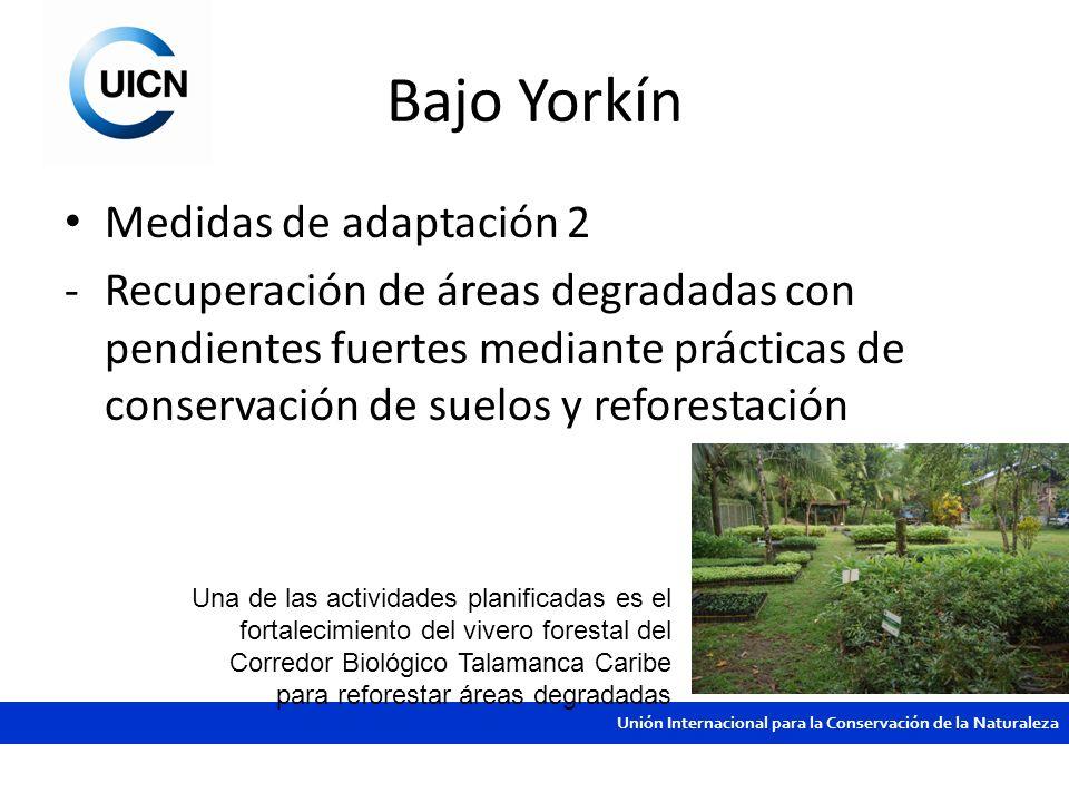 Unión Internacional para la Conservación de la Naturaleza Bajo Yorkín Medidas de adaptación 2 -Recuperación de áreas degradadas con pendientes fuertes
