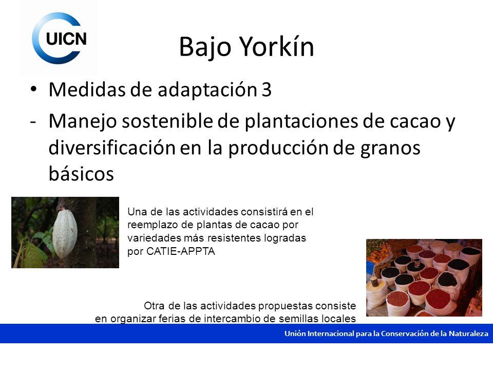 Unión Internacional para la Conservación de la Naturaleza Bajo Yorkín Medidas de adaptación 3 -Manejo sostenible de plantaciones de cacao y diversific