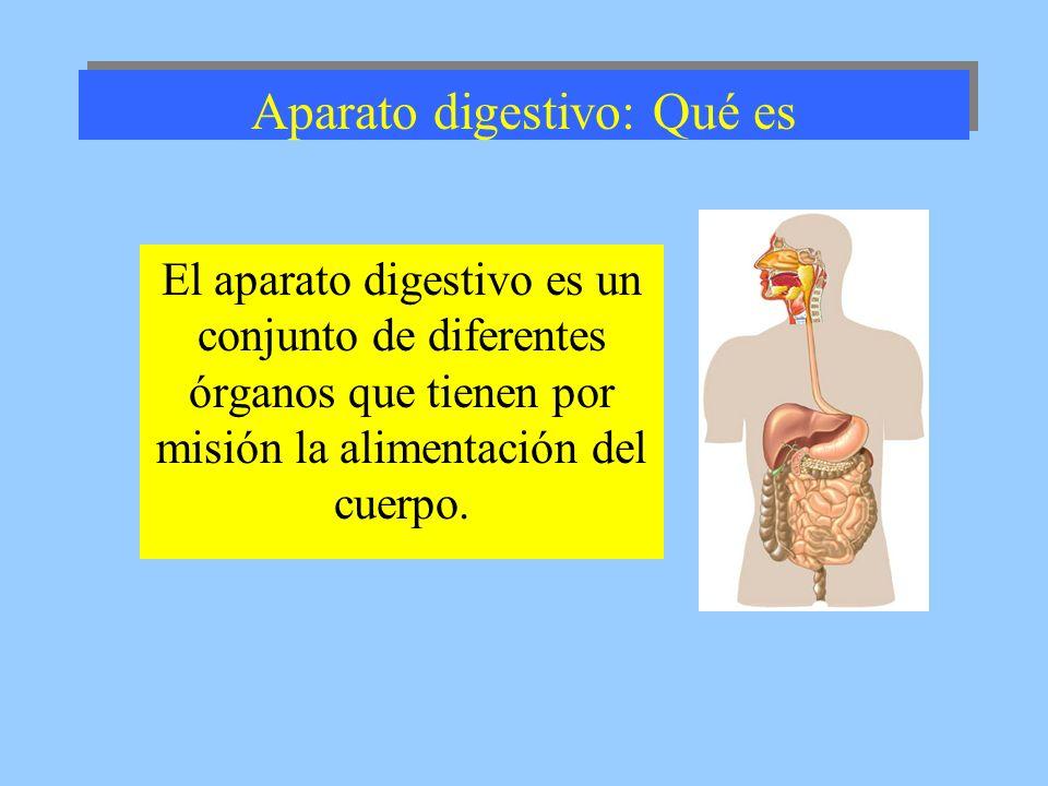 Aparato digestivo: Qué es El aparato digestivo es un conjunto de diferentes órganos que tienen por misión la alimentación del cuerpo.