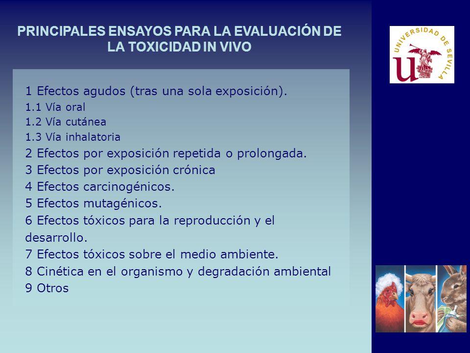 PRINCIPALES ENSAYOS PARA LA EVALUACIÓN DE LA TOXICIDAD IN VIVO 1 Efectos agudos (tras una sola exposición). 1.1 Vía oral 1.2 Vía cutánea 1.3 Vía inhal