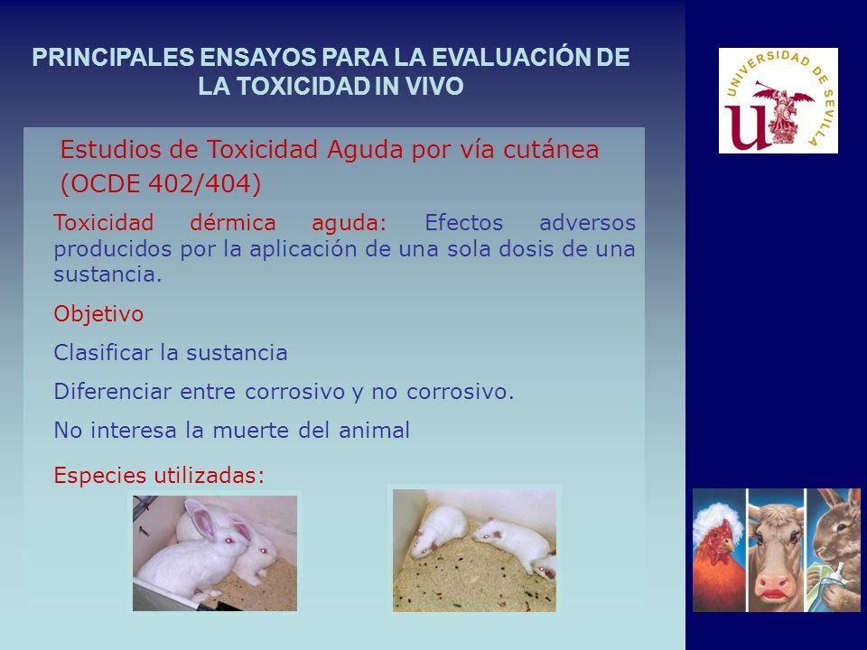 PRINCIPALES ENSAYOS PARA LA EVALUACIÓN DE LA TOXICIDAD IN VIVO Toxicidad dérmica aguda: Efectos adversos producidos por la aplicación de una sola dosis de una sustancia.