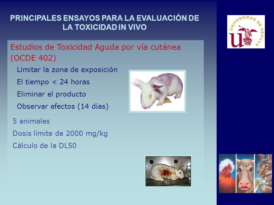 PRINCIPALES ENSAYOS PARA LA EVALUACIÓN DE LA TOXICIDAD IN VIVO Limitar la zona de exposición El tiempo < 24 horas Eliminar el producto Observar efectos (14 días) Estudios de Toxicidad Aguda por vía cutánea (OCDE 402) 5 animales Dosis límite de 2000 mg/kg Cálculo de la DL50