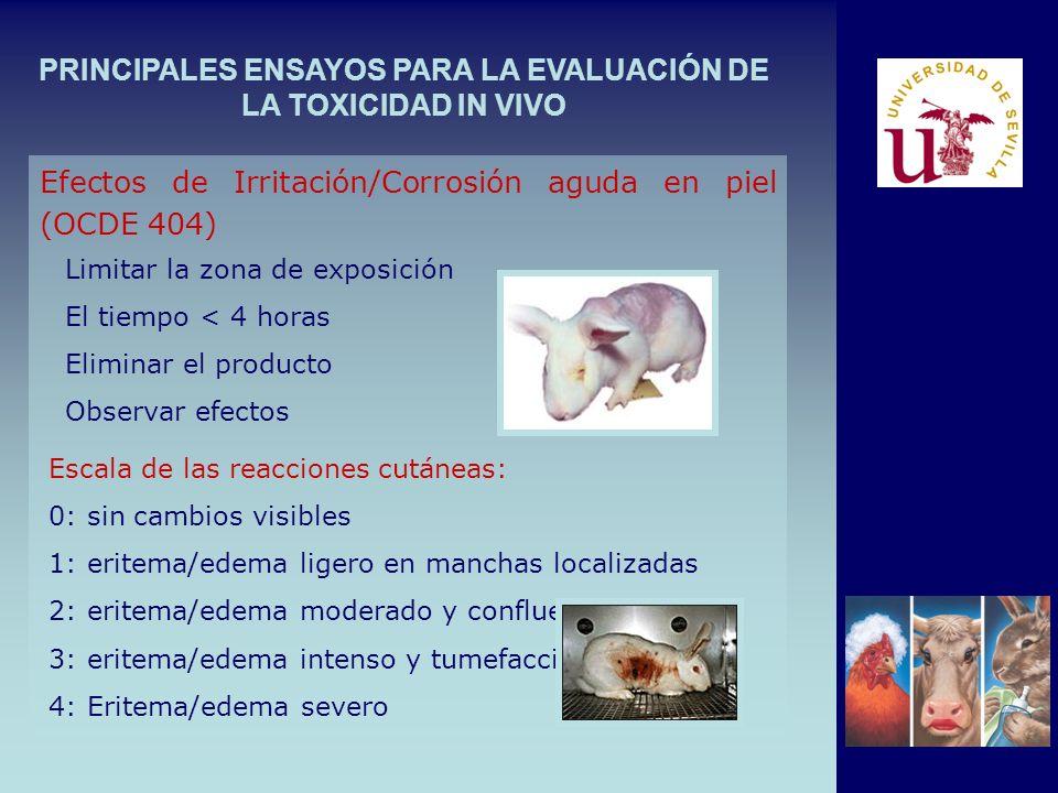 PRINCIPALES ENSAYOS PARA LA EVALUACIÓN DE LA TOXICIDAD IN VIVO Limitar la zona de exposición El tiempo < 4 horas Eliminar el producto Observar efectos Efectos de Irritación/Corrosión aguda en piel (OCDE 404) Escala de las reacciones cutáneas: 0: sin cambios visibles 1: eritema/edema ligero en manchas localizadas 2: eritema/edema moderado y confluente 3: eritema/edema intenso y tumefacción 4: Eritema/edema severo