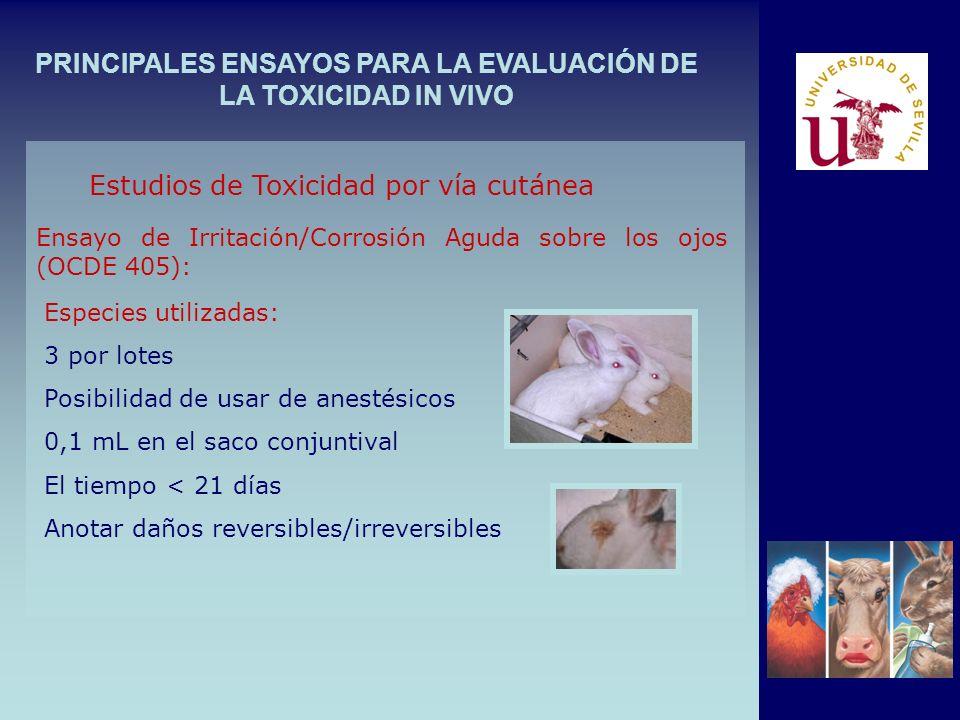 PRINCIPALES ENSAYOS PARA LA EVALUACIÓN DE LA TOXICIDAD IN VIVO Ensayo de Irritación/Corrosión Aguda sobre los ojos (OCDE 405): Estudios de Toxicidad p