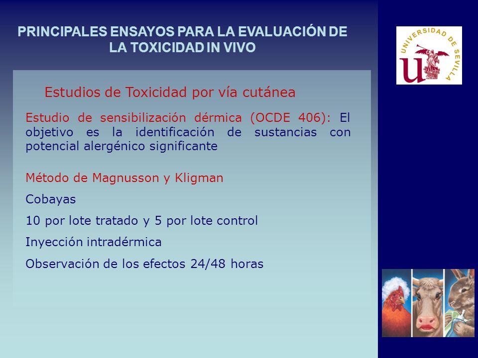 PRINCIPALES ENSAYOS PARA LA EVALUACIÓN DE LA TOXICIDAD IN VIVO Estudio de sensibilización dérmica (OCDE 406): El objetivo es la identificación de sustancias con potencial alergénico significante Estudios de Toxicidad por vía cutánea Método de Magnusson y Kligman Cobayas 10 por lote tratado y 5 por lote control Inyección intradérmica Observación de los efectos 24/48 horas