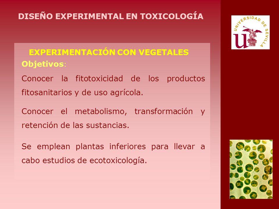 EXPERIMENTACIÓN CON VEGETALES Conocer la fitotoxicidad de los productos fitosanitarios y de uso agrícola. Objetivos : Conocer el metabolismo, transfor