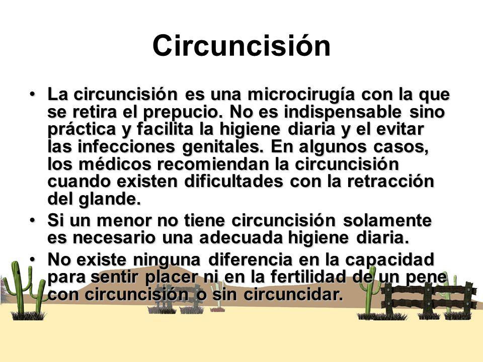 Circuncisión La circuncisión es una microcirugía con la que se retira el prepucio. No es indispensable sino práctica y facilita la higiene diaria y el