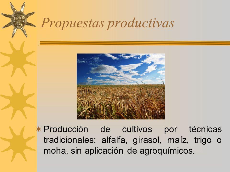 Propuestas productivas Producción de cultivos por técnicas tradicionales: alfalfa, girasol, maíz, trigo o moha, sin aplicación de agroquímicos.