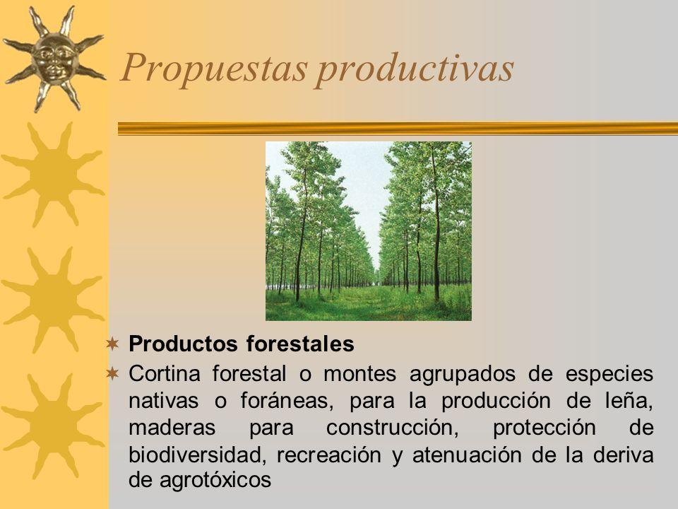 Propuestas productivas Productos forestales Cortina forestal o montes agrupados de especies nativas o foráneas, para la producción de leña, maderas pa