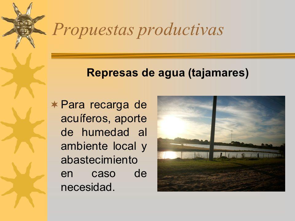 Propuestas productivas Para recarga de acuíferos, aporte de humedad al ambiente local y abastecimiento en caso de necesidad. Represas de agua (tajamar