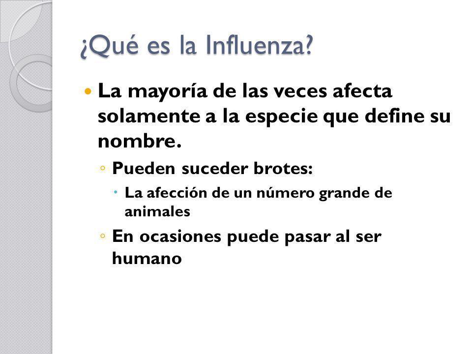 ¿Qué es la Influenza? La mayoría de las veces afecta solamente a la especie que define su nombre. Pueden suceder brotes: La afección de un número gran
