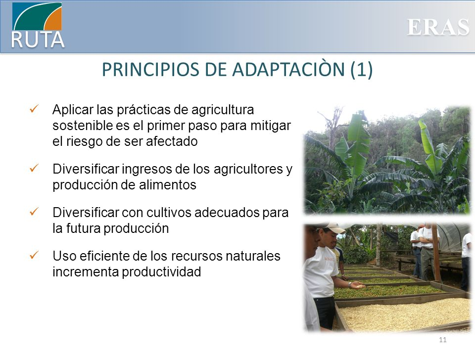 ERAS RUTA PRINCIPIOS DE ADAPTACIÒN (1) Aplicar las prácticas de agricultura sostenible es el primer paso para mitigar el riesgo de ser afectado Divers