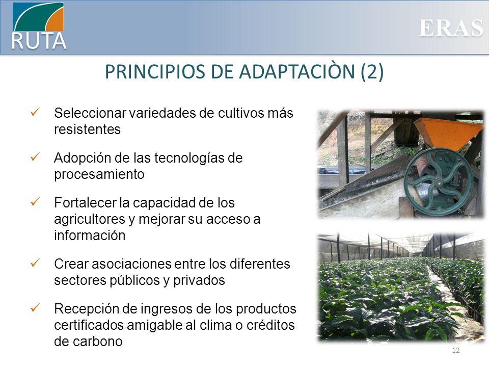 ERAS RUTA PRINCIPIOS DE ADAPTACIÒN (2) Seleccionar variedades de cultivos más resistentes Adopción de las tecnologías de procesamiento Fortalecer la c