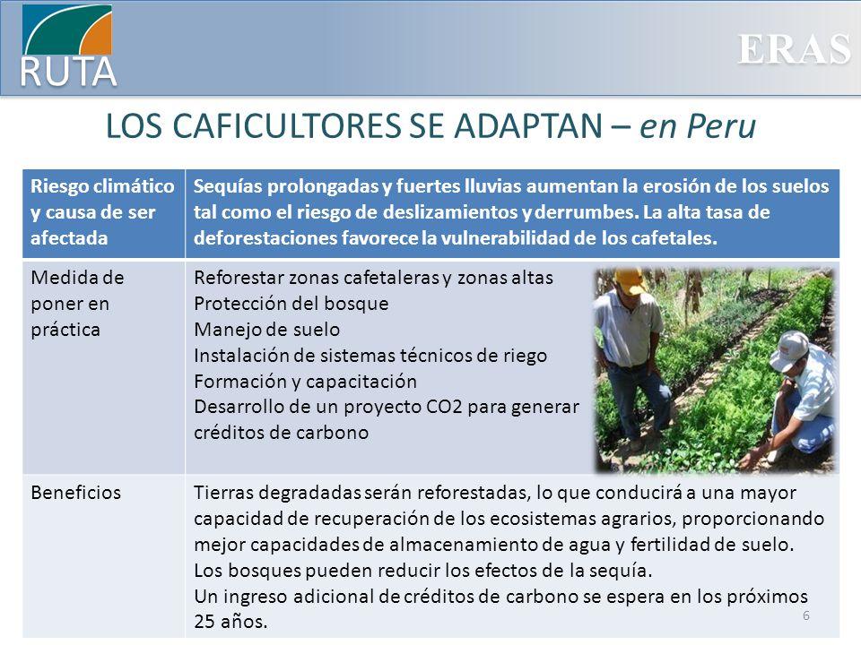 ERAS RUTA LOS CAFICULTORES SE ADAPTAN – en México Riesgo climático y causa de ser afectada El cambio de los patrones de precipitación y lluvias durante la temporada de cosecha impiden el secado del café bajo sol y así reducen la calidad del producto.