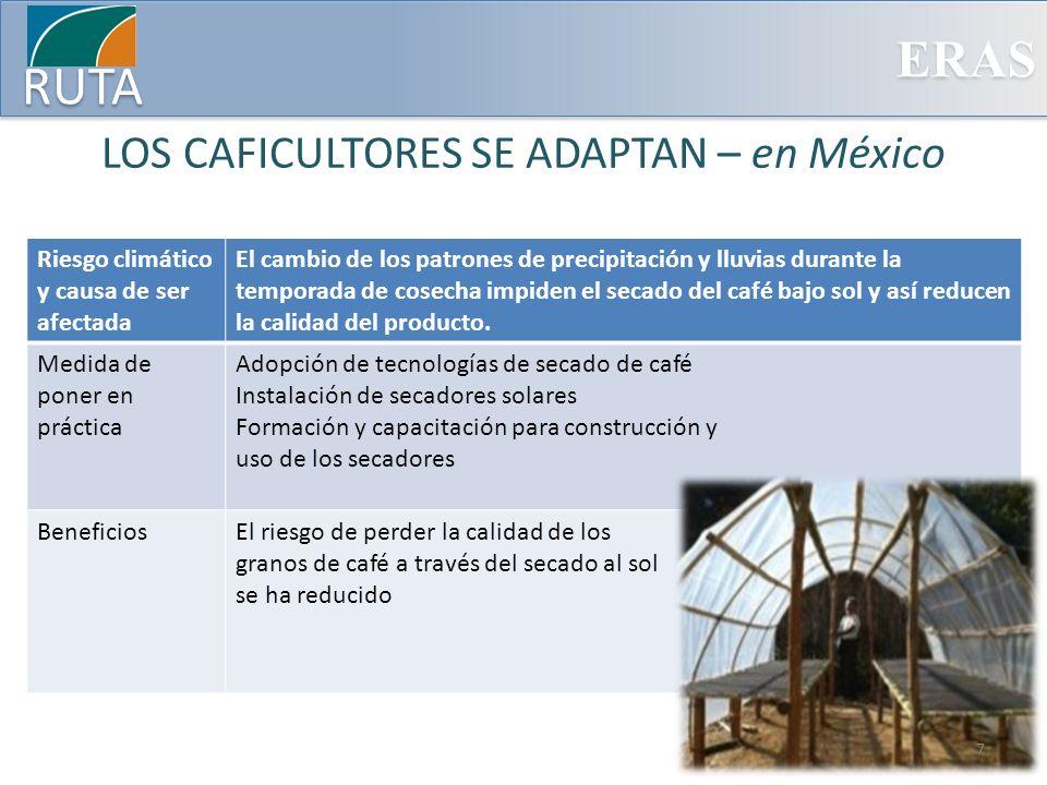 ERAS RUTA LOS CAFICULTORES SE ADAPTAN – en México Riesgo climático y causa de ser afectada El cambio de los patrones de precipitación y lluvias durant