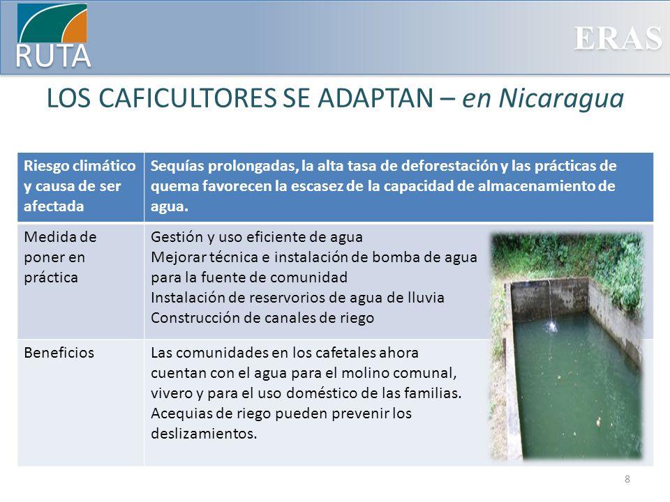 ERAS RUTA LOS CAFICULTORES SE ADAPTAN – en Nicaragua Riesgo climático y causa de ser afectada Sequías prolongadas, la alta tasa de deforestación y las