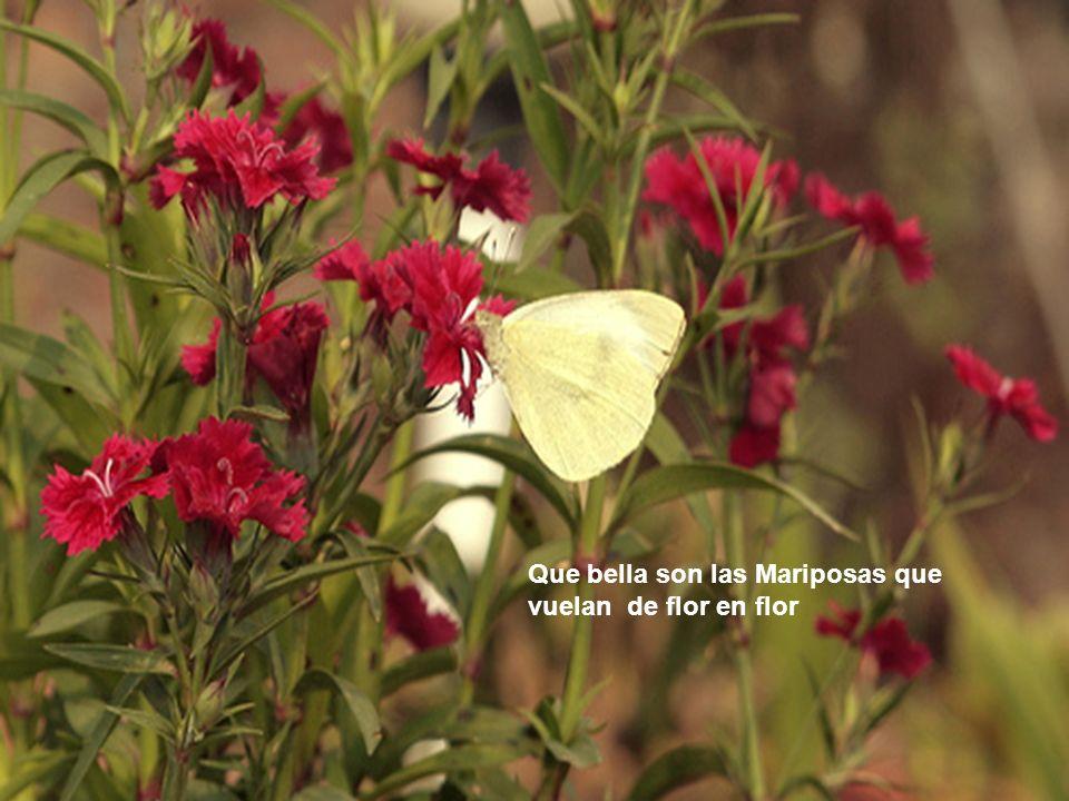 Que bello es comtemplar las flores y aspirar su fragancia en los ratos de nuestra vejes