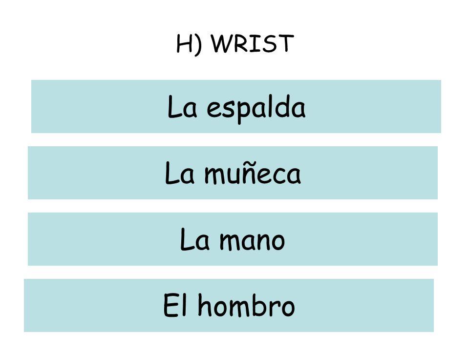 H) WRIST La espalda La muñeca La mano El hombro