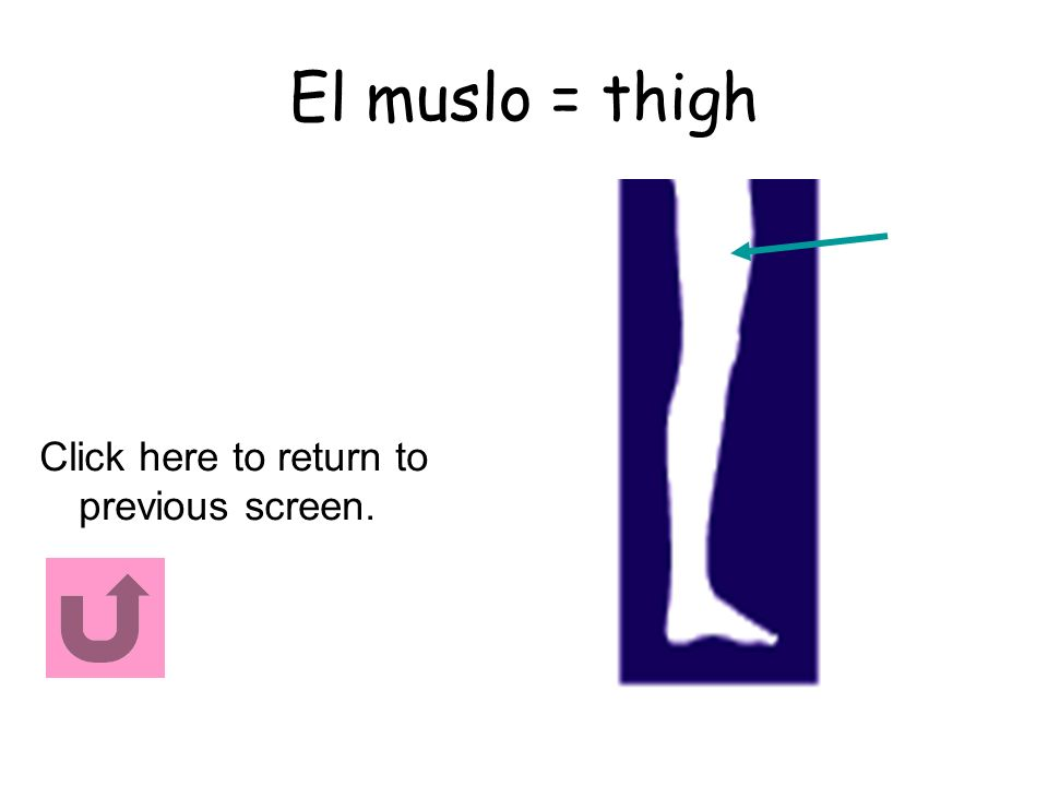 El muslo = thigh Click here to return to previous screen.