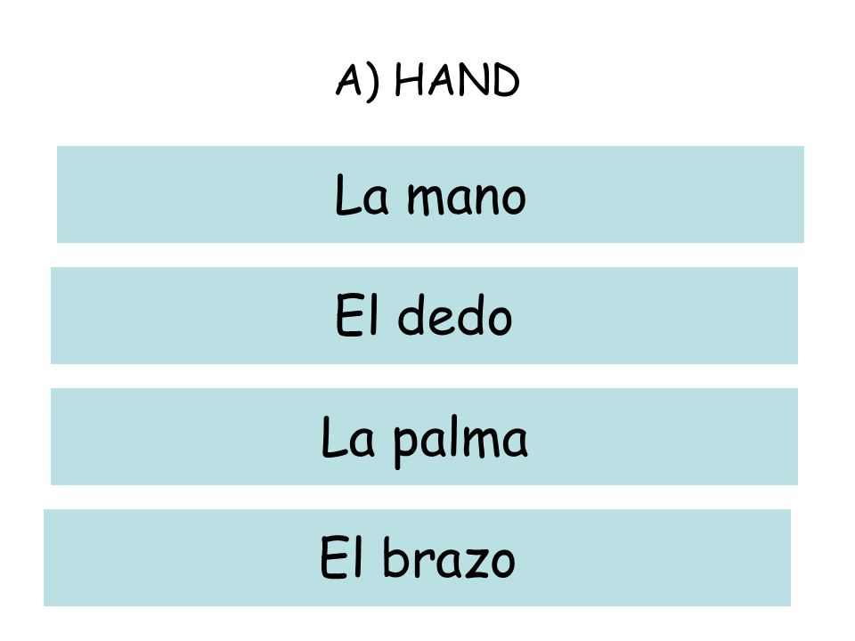 A) HAND La mano El dedo La palma El brazo