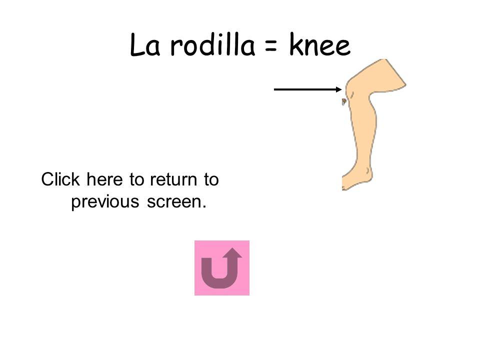 La rodilla = knee Click here to return to previous screen.