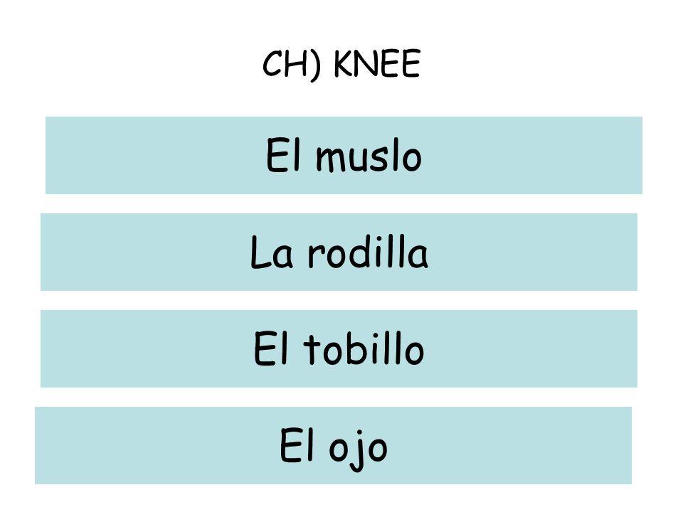 CH) KNEE El muslo La rodilla El tobillo El ojo