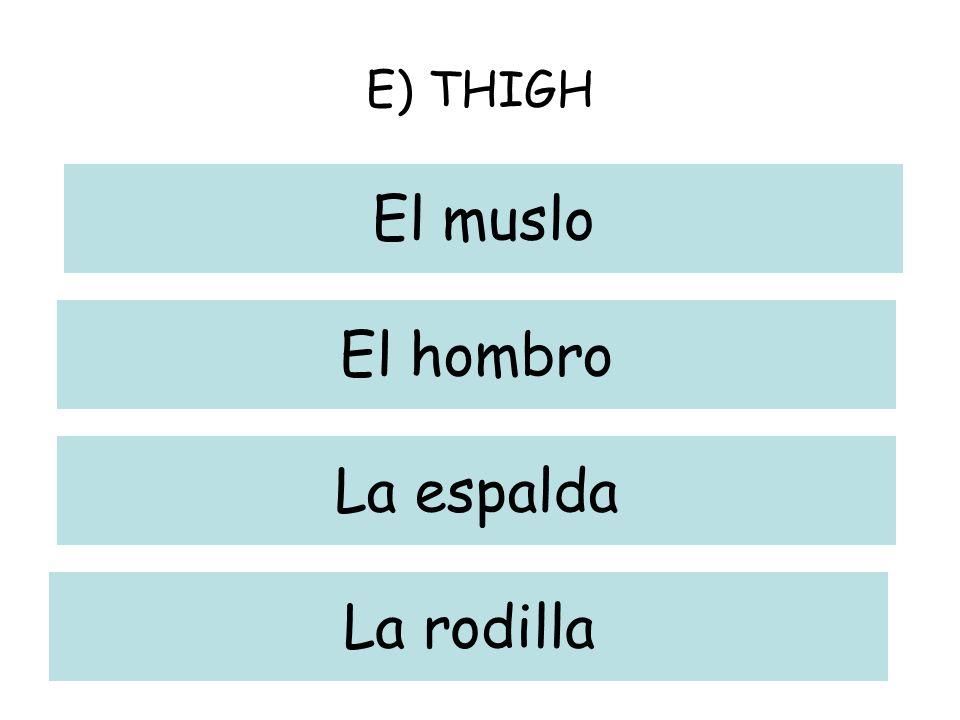 E) THIGH El muslo El hombro La espalda La rodilla