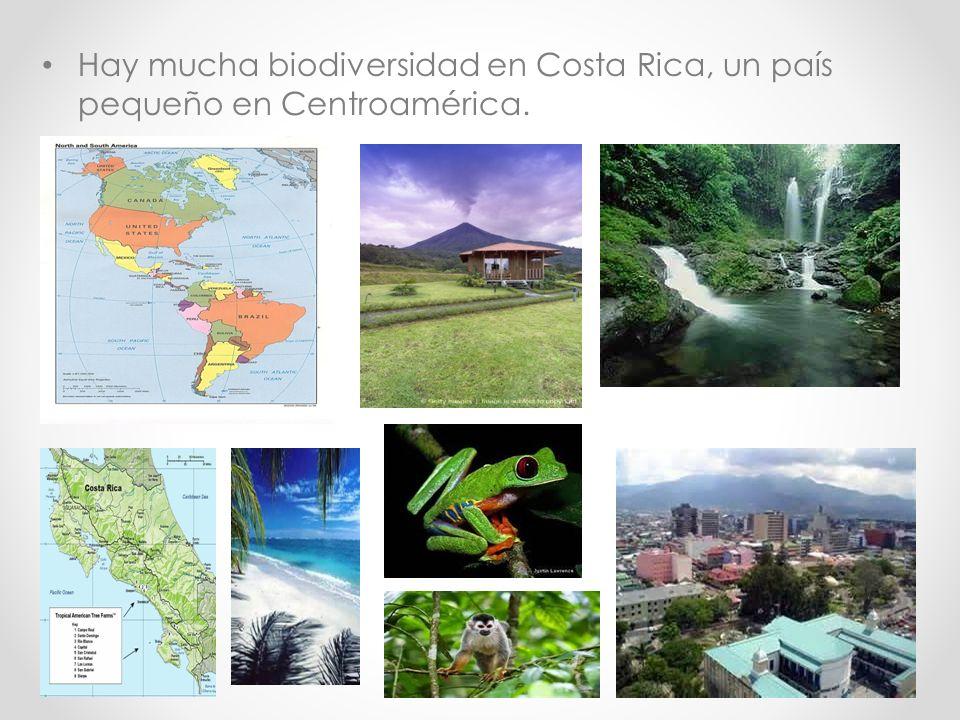 Hay mucha biodiversidad en Costa Rica, un país pequeño en Centroamérica.