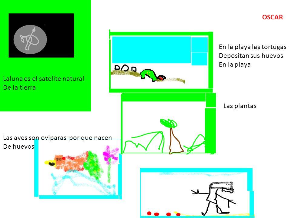 Laluna es el satelite natural De la tierra En la playa las tortugas Depositan sus huevos En la playa Las aves son oviparas por que nacen De huevos Las plantas OSCAR