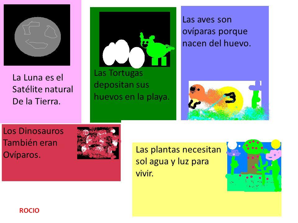ROCIO La Luna es el Satélite natural De la Tierra. Las Tortugas depositan sus huevos en la playa. Las aves son ovíparas porque nacen del huevo. Los Di