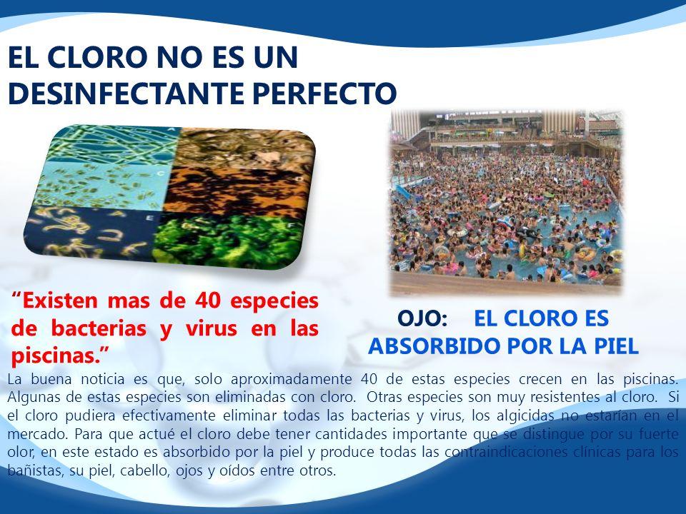 EL CLORO NO ES UN DESINFECTANTE PERFECTO Existen mas de 40 especies de bacterias y virus en las piscinas. OJO: EL CLORO ES ABSORBIDO POR LA PIEL La bu