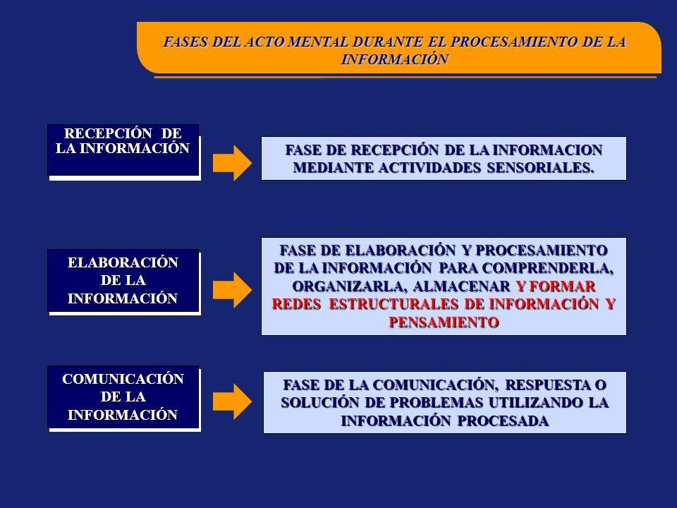 FASE DE ELABORACIÓN Y PROCESAMIENTO DE LA INFORMACIÓN PARA COMPRENDERLA, ORGANIZARLA, ALMACENAR Y FORMAR REDES ESTRUCTURALES DE INFORMACIÓN Y PENSAMIENTO FASE DE LA COMUNICACIÓN, RESPUESTA O SOLUCIÓN DE PROBLEMAS UTILIZANDO LA INFORMACIÓN PROCESADA ENTRADA DE LA INFORMACIÓN ELABORACIÓN DE LA INFORMACIÓN COMUNICACIÓN DE LA INFORMACIÓN FASE DE RECEPCIÓN DE LA INFORMACION MEDIANTE ACTIVIDADES SENSORIALES.