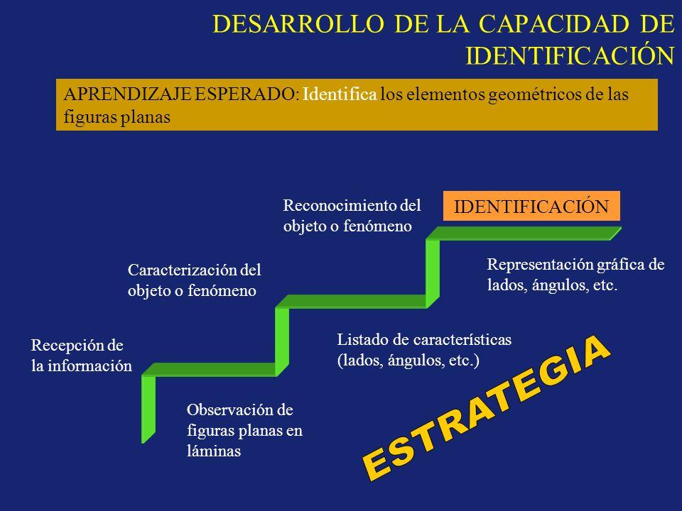 DESARROLLO DE LA CAPACIDAD DE IDENTIFICACIÓN IDENTIFICACIÓN Recepción de la información Caracterización del objeto o fenómeno Reconocimiento del objet