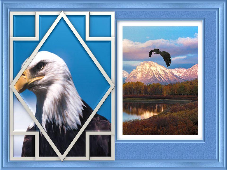 El águila empujó gentilmente sus pichones hacia la orilla del nido. Su corazón se aceleró con emociones conflictivas, al mismo tiempo en que sintió la