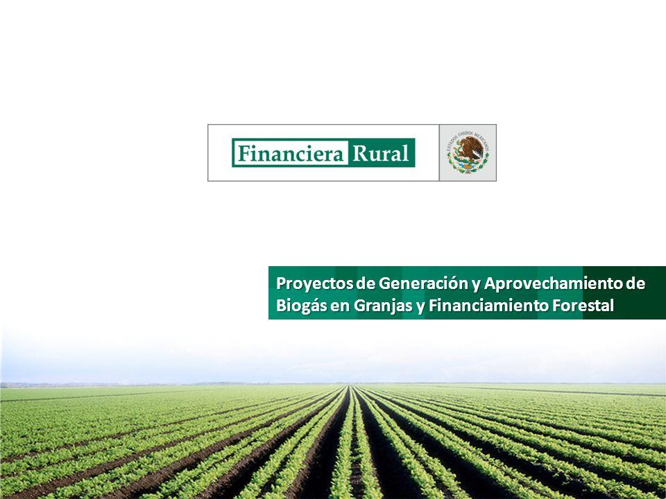 Aspectos Generales de Programático Entidades Involucradas: Financiera Rural - Coordinadora del Programa de Actividades (coordinating-management entity of the PoA) KfW Bankengruppe - Proveedor de Financiamiento para servicios de consultoría en reducciones de emisiones de gases de efecto invernadero.