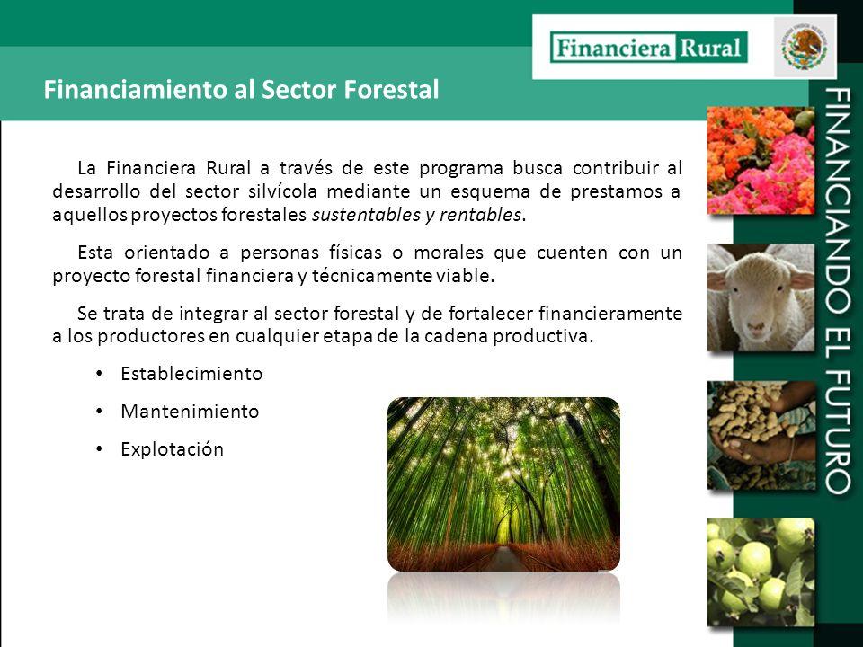 La Financiera Rural a través de este programa busca contribuir al desarrollo del sector silvícola mediante un esquema de prestamos a aquellos proyecto