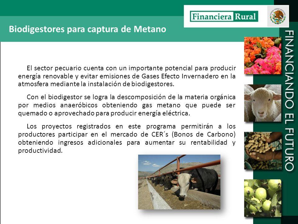 Biodigestores para captura de Metano El sector pecuario cuenta con un importante potencial para producir energía renovable y evitar emisiones de Gases