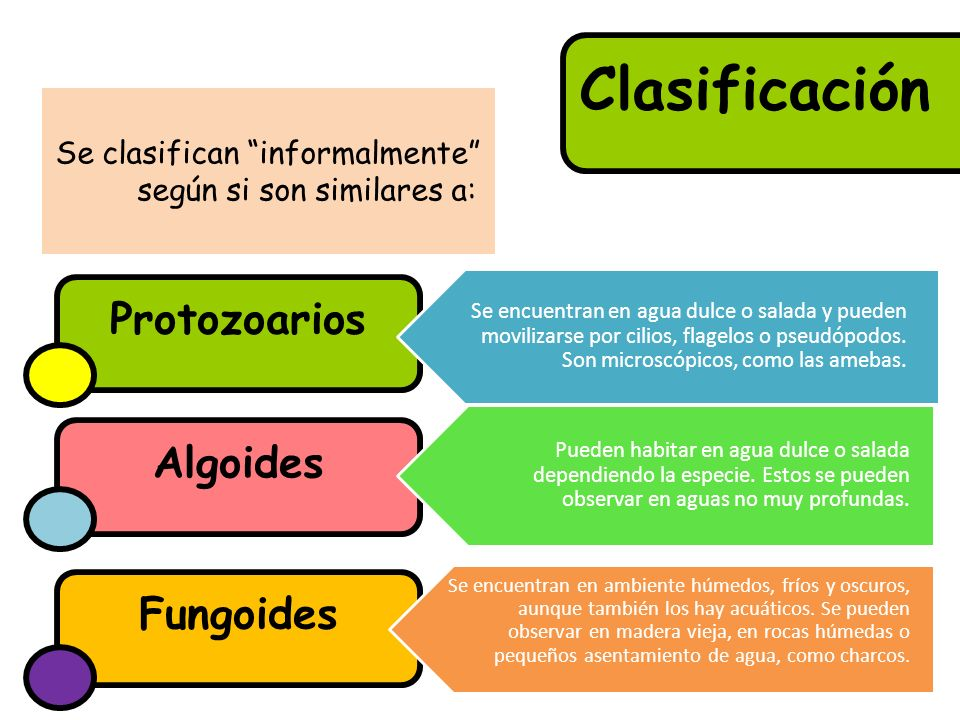 Se clasifican informalmente según si son similares a: Clasificación Algoides Protozoarios Fungoides Se encuentran en agua dulce o salada y pueden movilizarse por cilios, flagelos o pseudópodos.