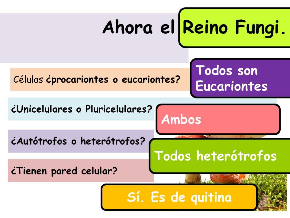 ¿Tienen pared celular? ¿Unicelulares o Pluricelulares? ¿Autótrofos o heterótrofos? Ahora el Reino Fungi. Células ¿procariontes o eucariontes? Todos so