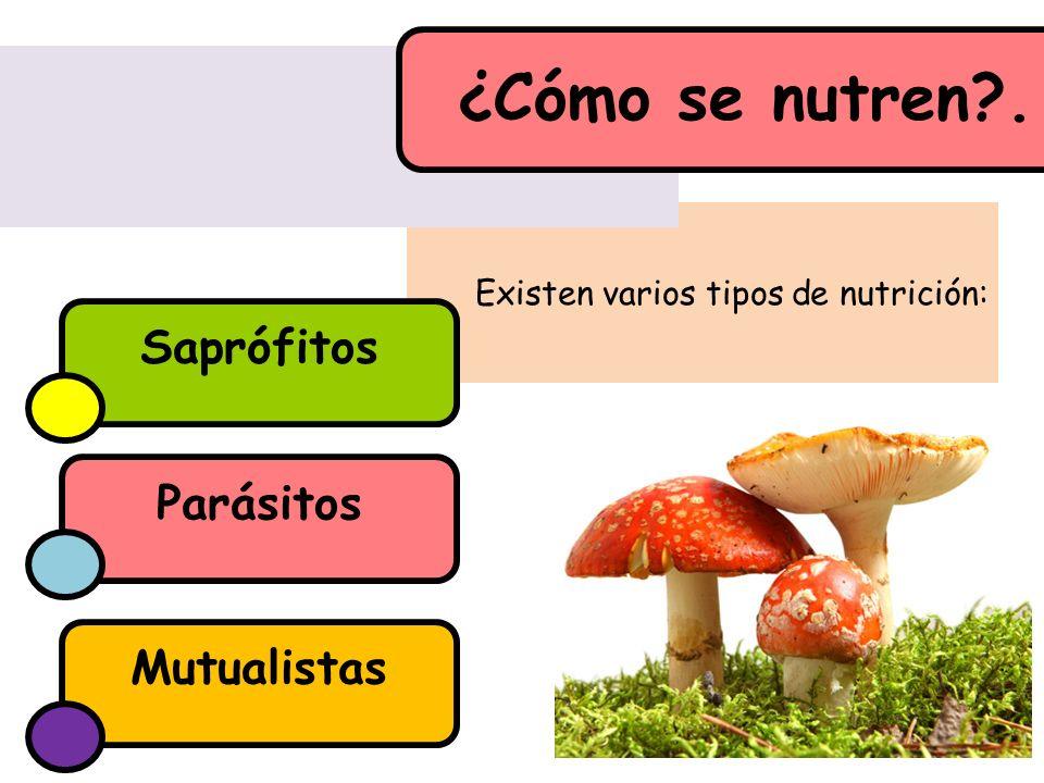Existen varios tipos de nutrición: ¿Cómo se nutren?. Parásitos Saprófitos Mutualistas
