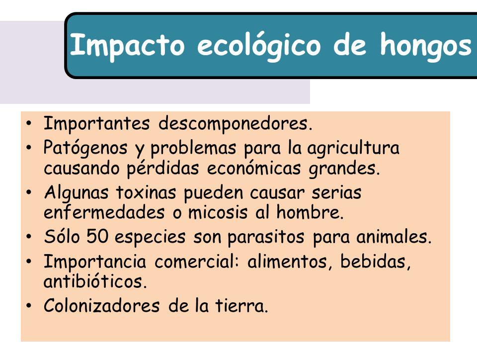 Impacto ecológico de hongos Importantes descomponedores. Patógenos y problemas para la agricultura causando pérdidas económicas grandes. Algunas toxin