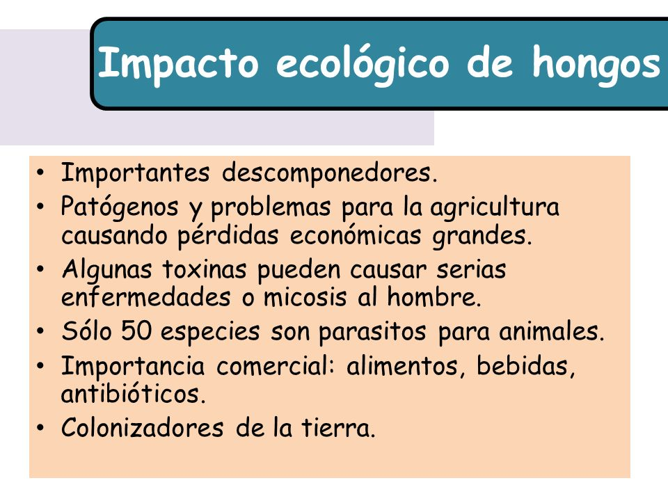 Impacto ecológico de hongos Importantes descomponedores.