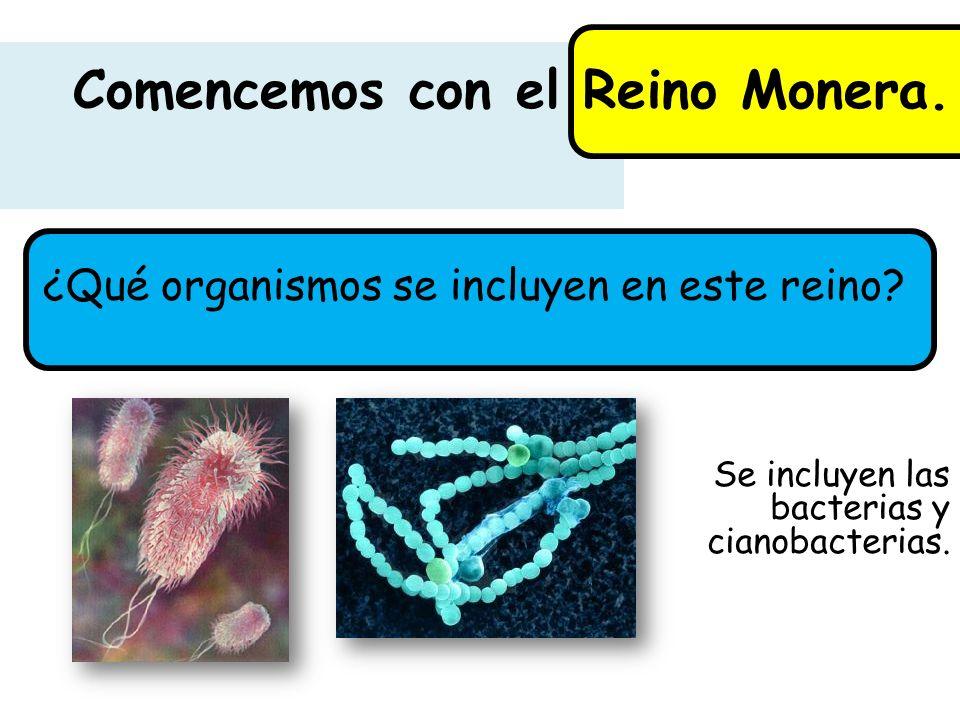 Comencemos con el Reino Monera. ¿Qué organismos se incluyen en este reino? Se incluyen las bacterias y cianobacterias.