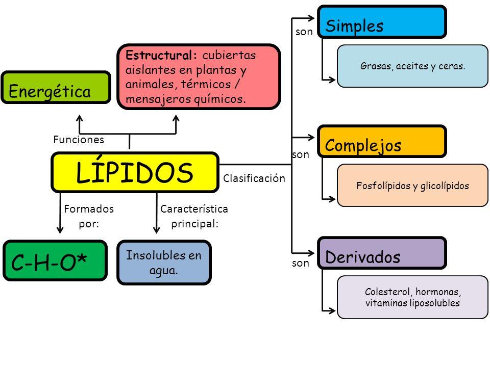 LÍPIDOS Energética Estructural: cubiertas aislantes en plantas y animales, térmicos / mensajeros químicos. Funciones Clasificación Simples Complejos D