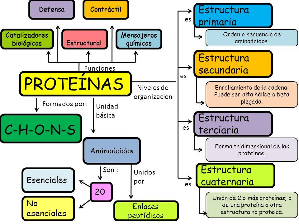 PROTEÍNAS Catalizadores biológicos Estructural Funciones Niveles de organización Estructura primaria Estructura secundaria Estructura terciaria Estructura cuaternaria Orden o secuencia de aminoácidos.